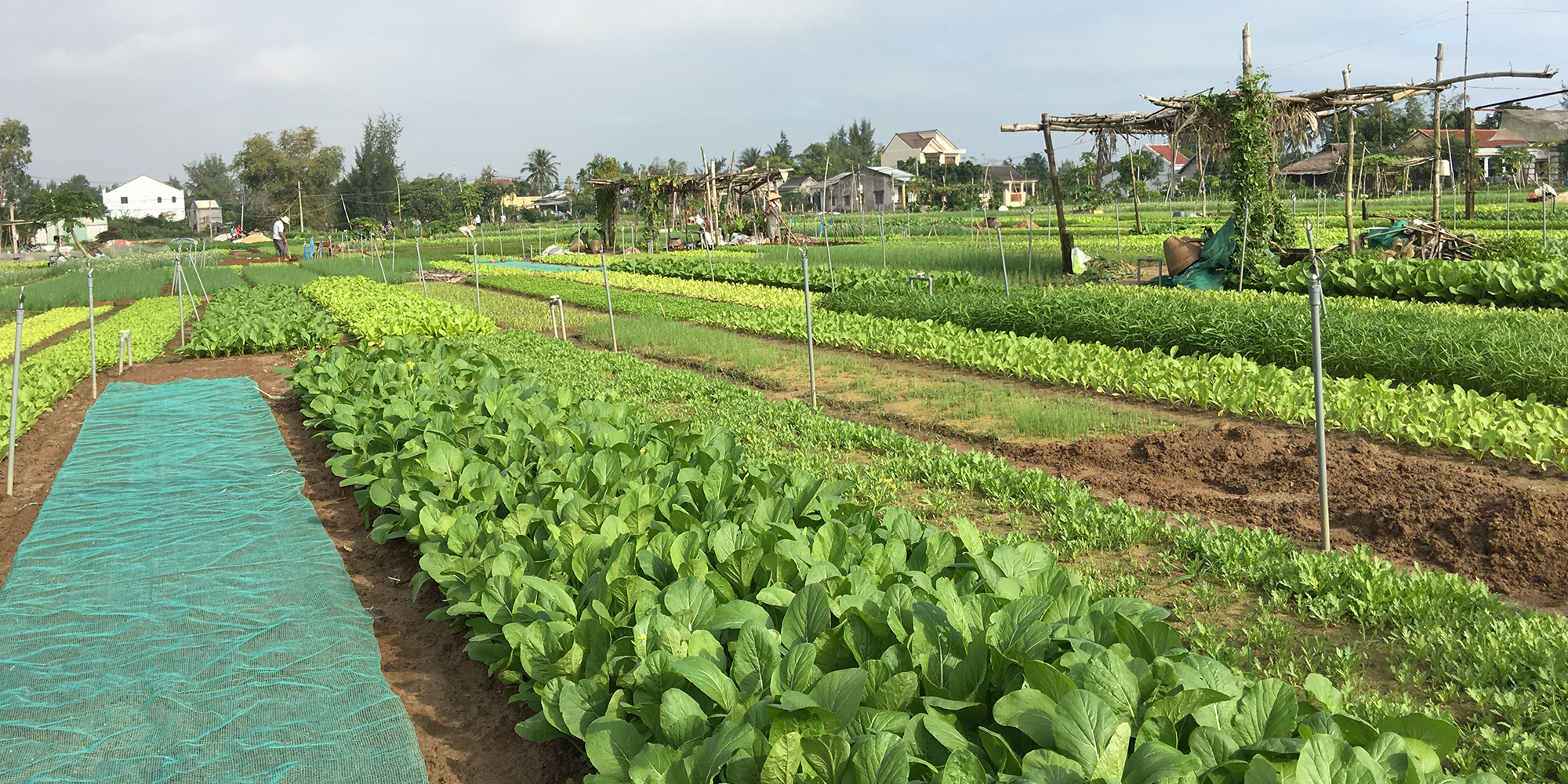 8. Tra Que Vegetable Village